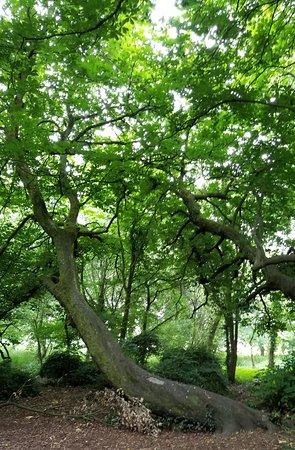 Kilkenny Castle Woods 2