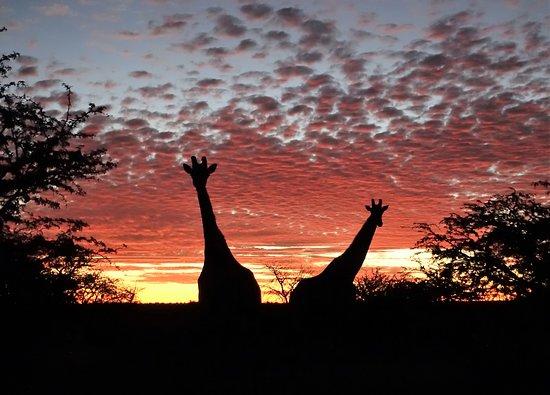 Tswalu Kalahari Game Reserve照片