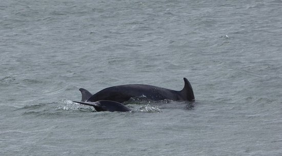 Fortrose, UK: Chanonry Point