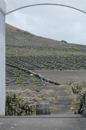 Masdache, İspanya: Vinos El Campesino/ Bodegas Barreto