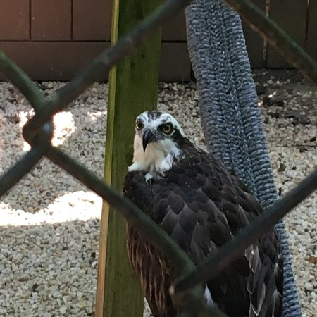 Carolina Raptor Center: photo1.jpg