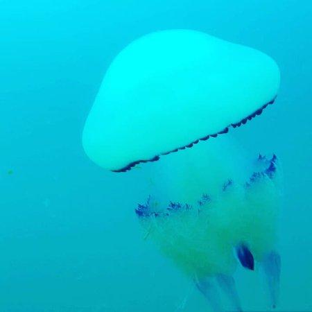 Bilde fra Isola Albarella
