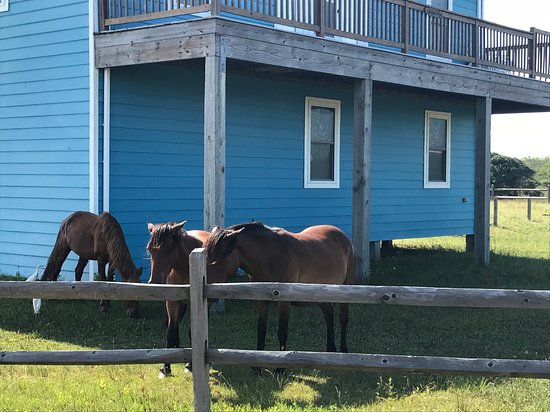 Wild Horse Adventure Tours Horses Are Everywhere Even In The Yards Of Houses