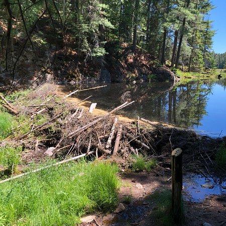 Beaver Pond Trail: photo0.jpg