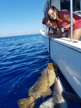 Key west fishing connection private charters aggiornato for Seven fish key west fl