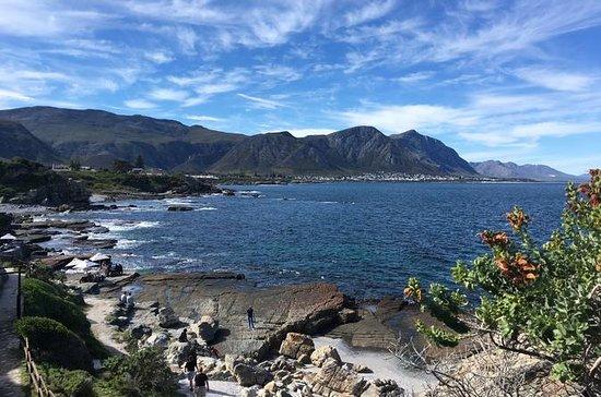 Ausflug mit Walbeobachtung ab Kapstadt