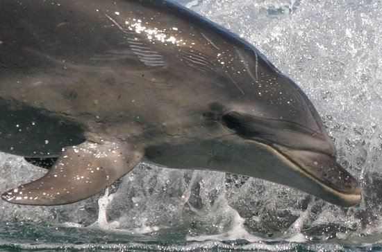 Wildlife and Dolphin Ecotour Cruise...