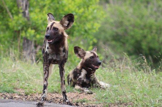 4 Day Trip to Kruger National Park...