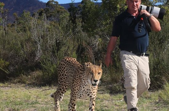 Sunset Cheetah Combo