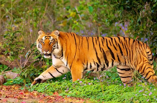 Golden Triangle Tour With Ranthambore...