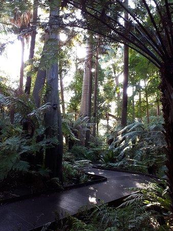 สวนพฤกษชาติหลวงเมลเบิร์น ภาพถ่าย