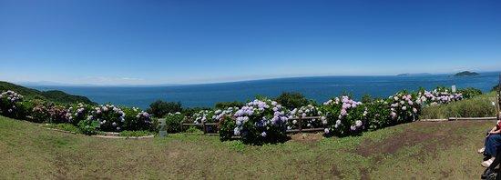 Sekizaki Ocean and Astronomical Observatory Hall: 青空と海と紫陽花