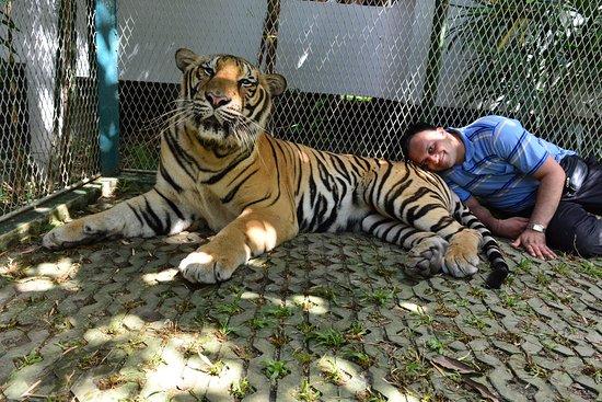 Tiger Park Pattaya: tiger cage