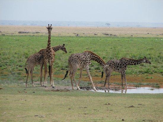 Pollman's Tours & Safaris