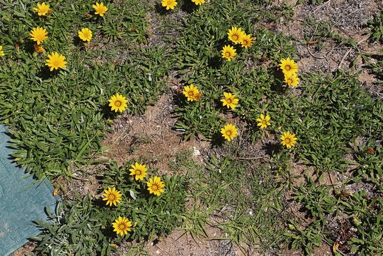 Pool of Siloam: There were flowers on the grass