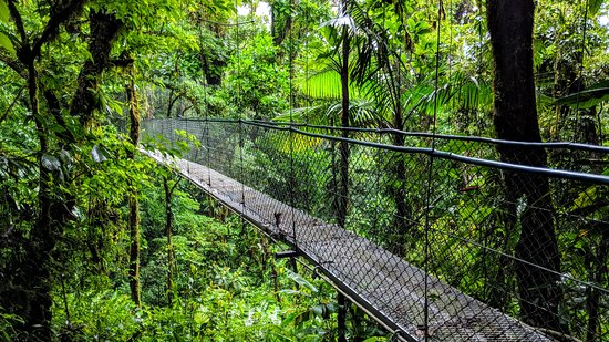 Costa Rica Unique Transfers and Tours: You cross over this hanging bridge