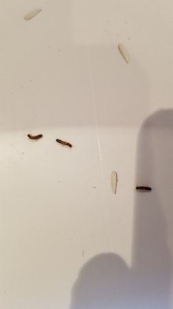 Wailea Elua Village: Termites in kitchen
