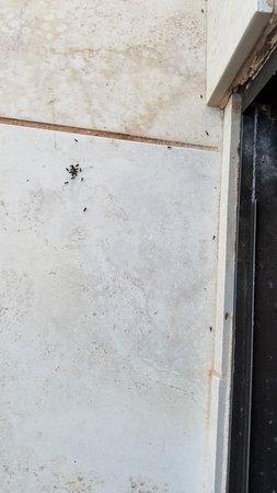 Wailea Elua Village: Lanai ants