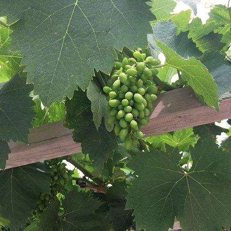 Zhangyu International Grape Wine City