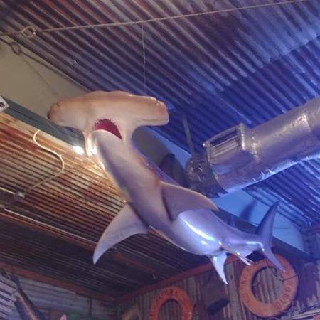 Hammerhead Restaurant Panama City Beach