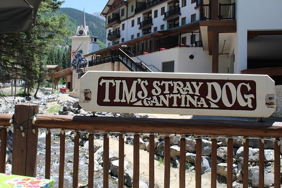Tim's Stray Dog Cantina: great creek side setting