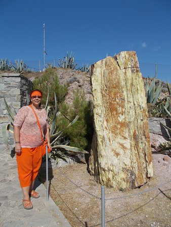 The Natural History Museum of the Lesvos Petrified Forest: petrified tree in the small park near the museum