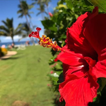 The Hale Pau Hana: Flowers in bloom on the property. Guest photo courtesy @ampherion.