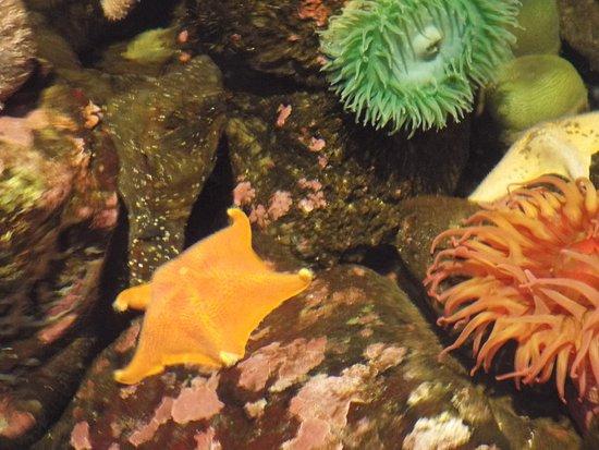 Oregon Coast Aquarium照片