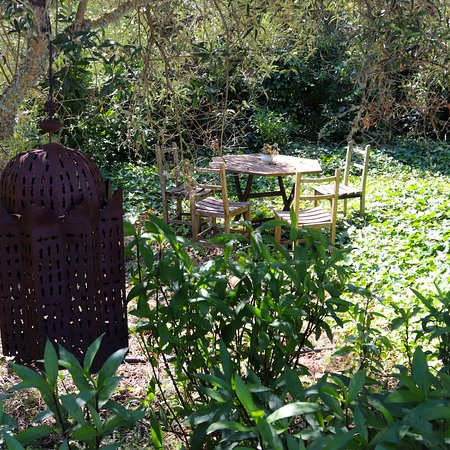 A charming table abandoned in an overgrown corner