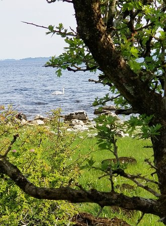 Lecarrow, Irlanda: Swans