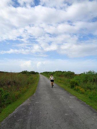 Foto de Anhinga Trail