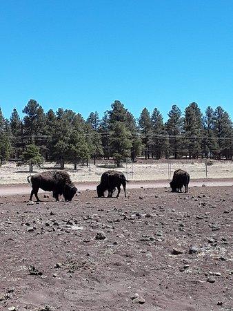 Williams, AZ: 20180620_104254_large.jpg