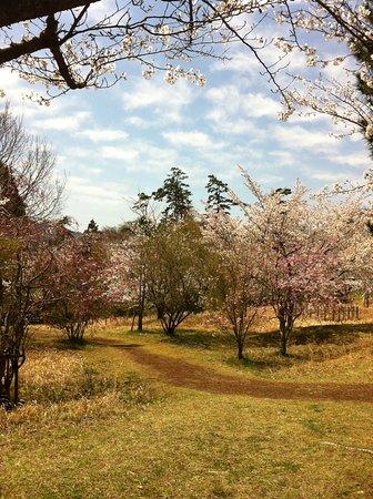 Ippommatsu Park