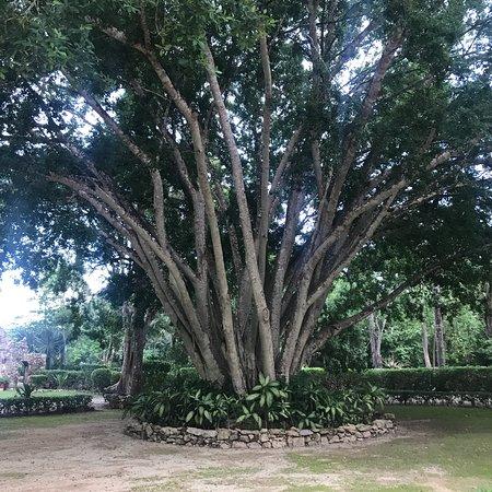 Hacienda Chichen: photo9.jpg
