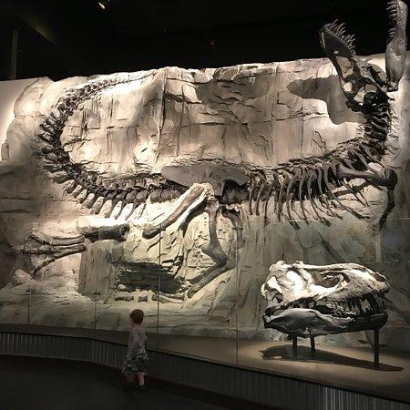 Bilde fra Royal Tyrrell Museum