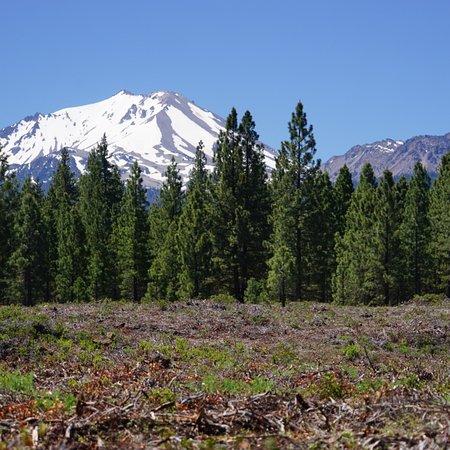 Mineral, Californien: photo9.jpg