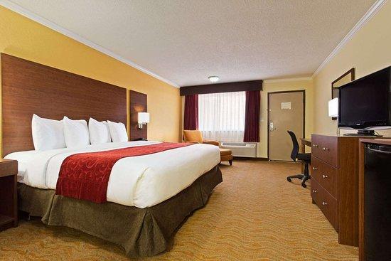Ramada by Wyndham Tampa Airport Westshore: Guest room