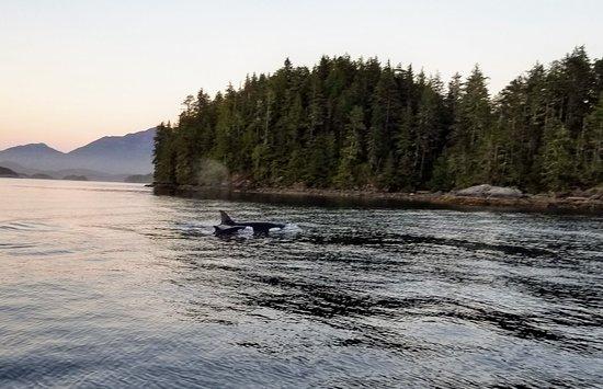 Nootka Island, Kanada: 20180618_213041_051_large.jpg
