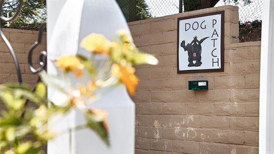 Danville, CA: Pet Area