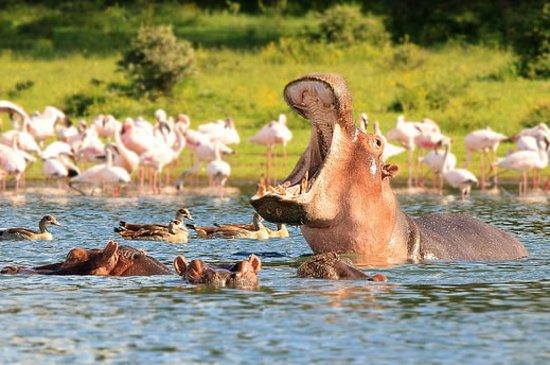 Provincia del valle del Rift, Kenia: lake naivasha waters with hippos