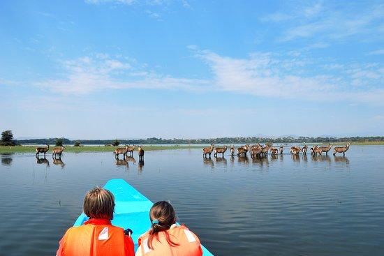 Rift Valley Province, Kenya: boat ride at lake naivasha