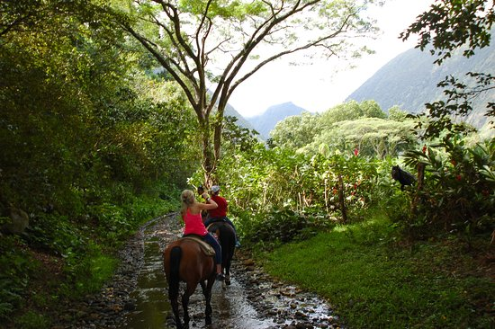 Na'alapa Stables - Waipio Valley: shaded, gorgeous trail for most of the ride, horses like to eat the avocados on the ground