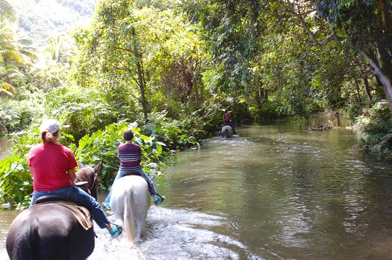 Na'alapa Stables - Waipio Valley: didn't know we would ride through this deep of water but thrilling