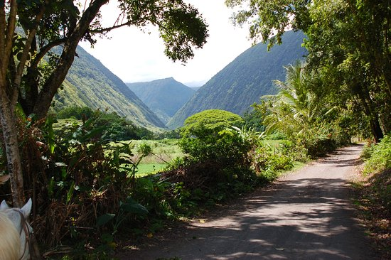 Na'alapa Stables - Waipio Valley: Unbelievable views