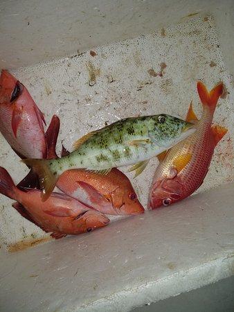 Nazaki Residences Beach Hotel: Улов за полтора часа, хищная рыба, с лодки на рифе
