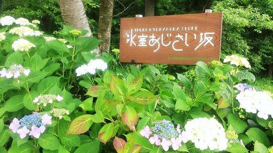 Himuro Ajisaizaka