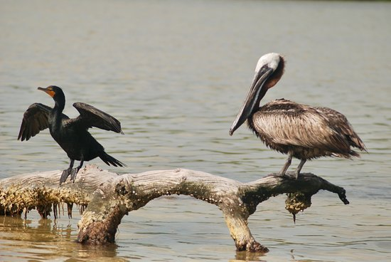 Rio Lagartos Adventures: Lots of birds posing for you