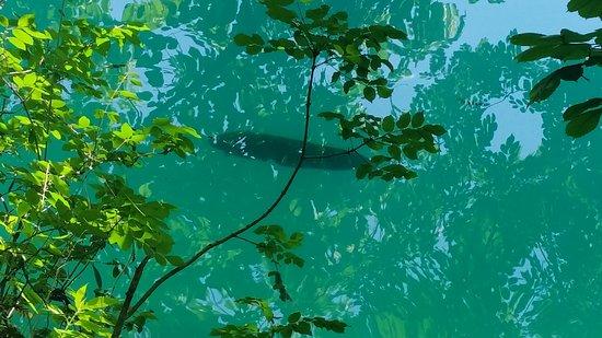 Bled Island: Large catfish