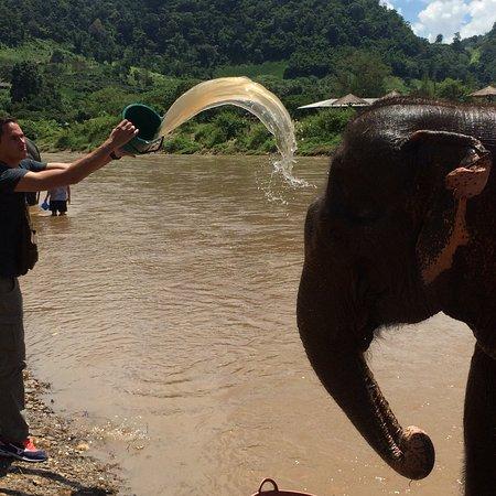 Elephant Nature Park: On a adoré !