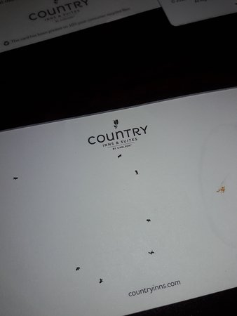 Country Inn & Suites by Radisson, Fayetteville-Fort Bragg, NC: Ants 2nd picture!!